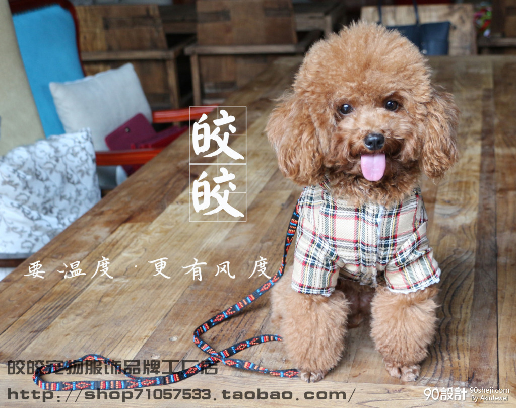 皎皎宠物服装